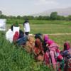 अफगान सरकारले रोजगारी सिर्जना र खाद्य संकट हटाउने कार्यक्रम ल्याउने