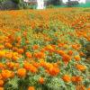 फूलले दियो तिहारको सङ्केत(फोटोफिचर)